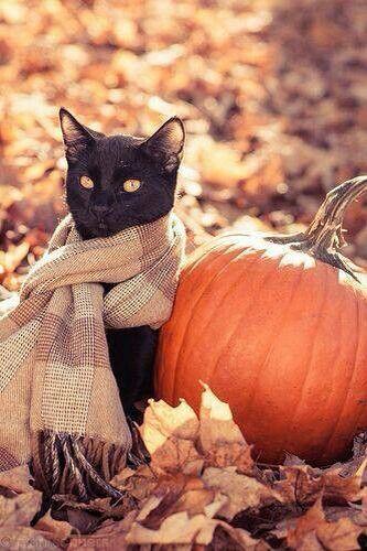 chat noir automne